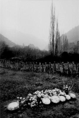 Suzy, Pipiriki, 1981