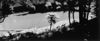 Tree fern, Arimatea 1981