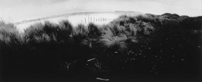 Languard's Bluff, 1982
