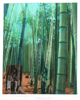 Bamboo Forest, Ken Choji, Kamakura, Japan. From the Shrine Series
