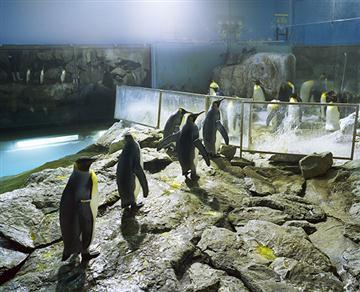 Anne Noble; Antarctica (Jurong Bird Park, Singapore); 2003-2012; 2012/4/5