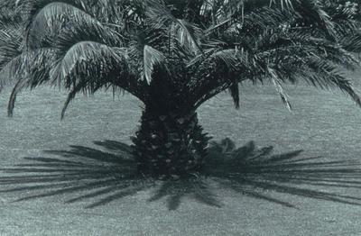 Queens Park Wanganui 1980