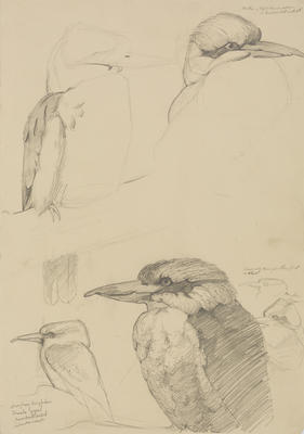 Vivian Smith; Untitled (Laughing kookaburra); 1913-1917?; 1988/27/477