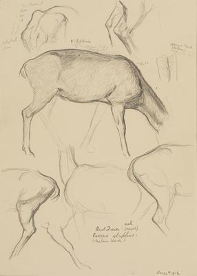Vivian Smith; Untitled (Red deer); 24 Dec 1913; 1988/27/461