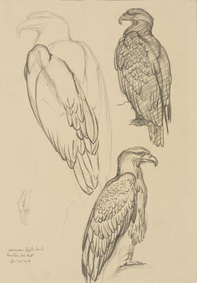 Vivian Smith; Untitled (American eagle); 26 Apr 1914; 1988/27/460