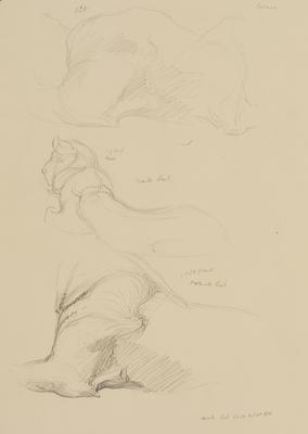 Vivian Smith; Untitled (Lion cubs); Feb 1913-Jun 1914; 1988/27/455