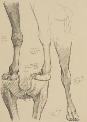 Vivian Smith; Untitled (Camel); Feb 1914; 1988/27/453