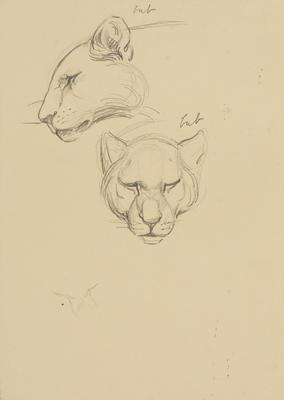 Vivian Smith; Untitled (Lion cub); Feb 1913-Jun 1914?; 1988/27/450