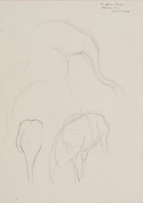 Vivian Smith; Untitled (European crane); 01 Apr 1914; 1988/27/445