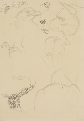 Vivian Smith; Untitled (American eagle and hyena); 16 Apr 1914; 1988/27/440