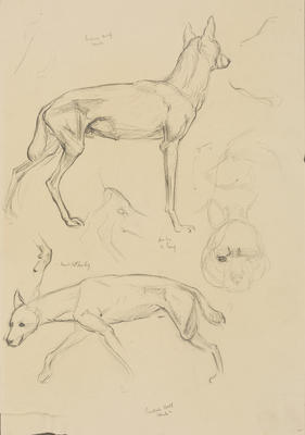 Vivian Smith; Untitled (Indian wolf and hyena); 1913-1917?; 1988/27/436