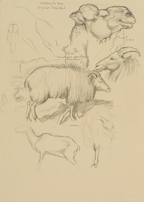Vivian Smith; Untitled (Thar and camel); 1913-1917?; 1988/27/434