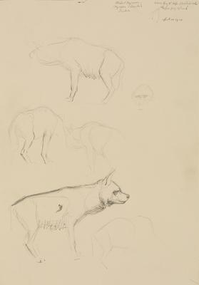 Vivian Smith; Untitled (Hyena); 01 Apr 1910; 1988/27/423