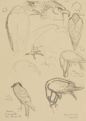 Vivian Smith; Untitled (Harrier); Aug 1913; 1988/27/432