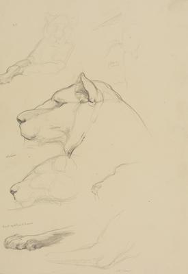 Vivian Smith; Untitled (Lioness and cub); Feb 1913-Jun 1914; 1988/27/431