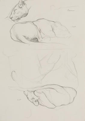 Vivian Smith; Untitled (Lioness and cubs); 1913-1917?; 1988/27/428