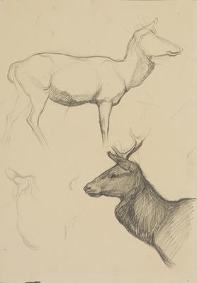 Vivian Smith; Untitled (Stag); 1913-1917?; 1988/27/427