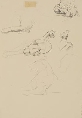 Vivian Smith; Untitled (Lion and lioness); 1913-1917?; 1988/27/422