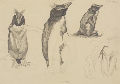 Untitled (Rockhopper penguin)