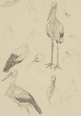 Untitled (Stork)