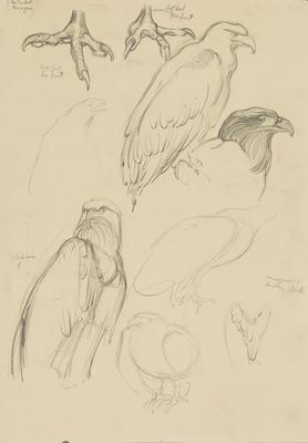 Vivian Smith; Untitled (American eagle); 1913-1917?; 1988/27/411