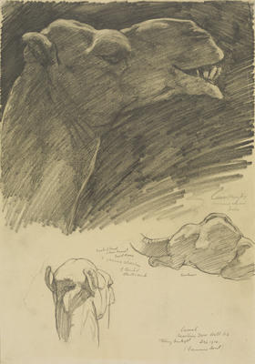 Vivian Smith; Untitled (Common camel); Dec 1914; 1988/27/406