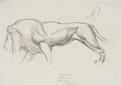 Vivian Smith; Untitled (Lion); Dec 1913; 1988/27/400