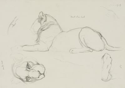 Vivian Smith; Untitled (Male lion cub); Dec 1913; 1988/27/397