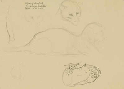 Vivian Smith; Untitled (Hunting leopard); 1913-1914?; 1988/27/395