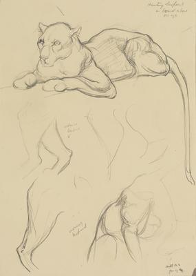Vivian Smith; Untitled (Leopards); Jan 1914; 1988/27/390