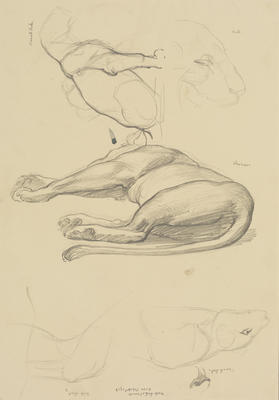 Vivian Smith; Untitled (Lioness and cubs); Feb 1913-Jun 1914; 1988/27/389