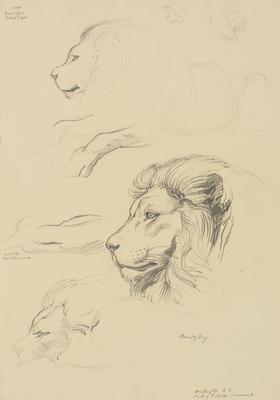 Vivian Smith; Untitled (Lion); 09 Feb 1914; 1988/27/386