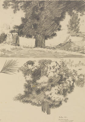 Untitled (Trees, Nelson)
