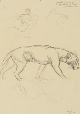 Vivian Smith; Untitled (Leopards); Jan 1914; 1988/27/391