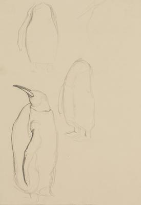 Vivian Smith; Untitled (Emperor Penguin); 1913-1917?; 1988/27/416