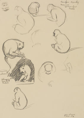 Vivian Smith; Untitled (Macaque and rhesus monkeys); 08 Jan 1914; 1988/27/425