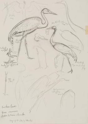 Vivian Smith; Untitled (European crane); Aug 1913; 1988/27/433