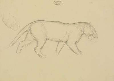 Vivian Smith; Untitled (Leopard); 1913-1917?; 1988/27/438