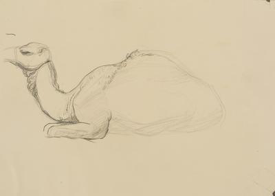 Vivian Smith; Untitled (Camel); 1913-1917?; 1988/27/443