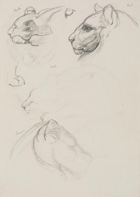 Vivian Smith; Untitled (Lion cub and lioness); Feb 1913-Jun 1914?; 1988/27/451