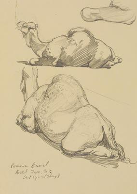 Vivian Smith; Untitled (Camel); Oct 1913; 1988/27/454