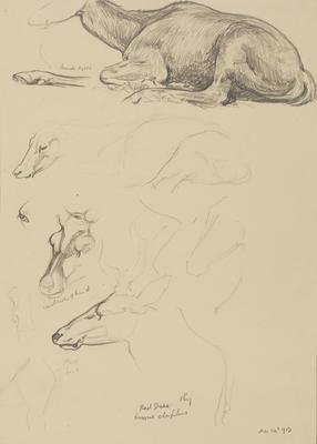 Vivian Smith; Untitled (Red deer); 24 Dec 1913; 1988/27/462