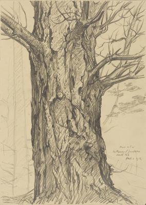 Vivian Smith; Untitled (Pine tree); 02 Feb 1913; 1988/27/492
