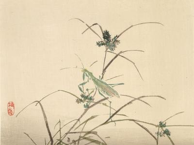 Untitled (preying mantis)