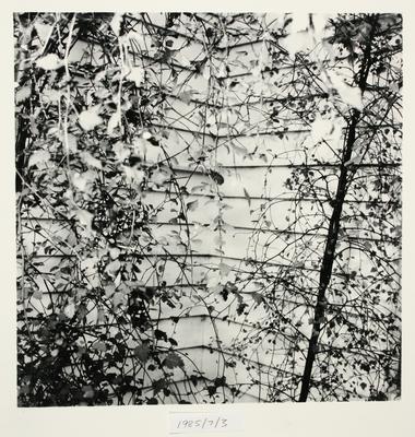 Peter Peryer; Ribbonwoods; 1985; 1985/7/3
