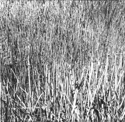 Peter Peryer; Apple Tree Dam; 1985; 1985/7/4