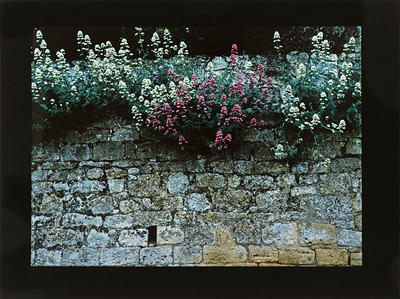 Wall and Flowers, Beaumont, France, 1984
