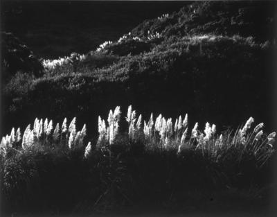 Toi Tois Georgetti Road Wanganui 1984