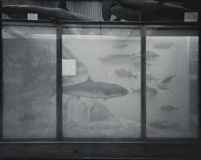 """Nature Morte"" (Fish) Wanganui Museum"