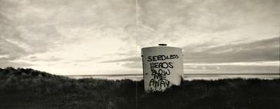 Seedless Heads Blow Me Away, Gisborne